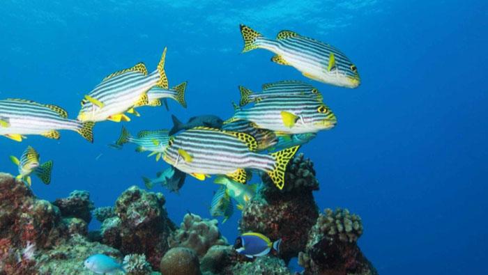壁纸 海底 海底世界 海洋馆 水族馆 桌面 700_395